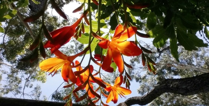tree flowers - Copy